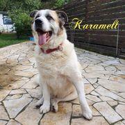 Karamell sucht ein liebevolles Zuhause
