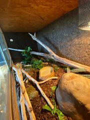 Komplett Terrarium mit Kornnattern