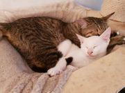 Katzenduo mit Spaßgarantie sucht Familie