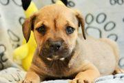 Herziges Hundekind Fips sucht Familie