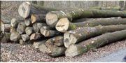 Buchenstämme für Brennholz mit Transport