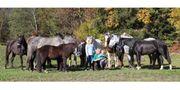 Viele verschiedene Pferde