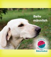 Bello - Ich mache meinem Namen