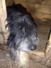Toto wurde in einer Mülltonne