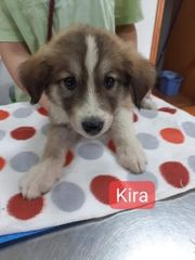 Kira wünscht sich ein Körbchen