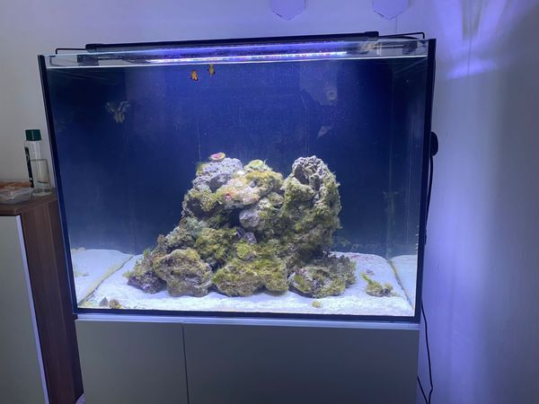 Aquarium komplettiert