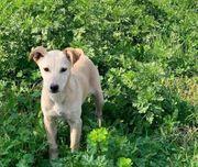 Vivien liebes Hundemädchen ca 4