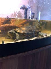 Schildkröte in gute Hände