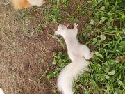Im tausch Eichhörnchen