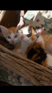 süße Kitten sind bereit für