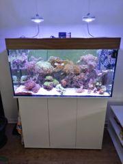 Juwel Meerwasser Aquarium 200l