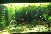 Aquarium mit Fische nur Abholung