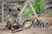 Schenken Sie Odin ein Zuhause