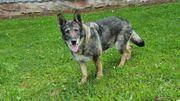 Luna 8 5 Jahre alt