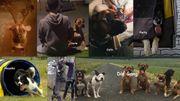 Biete erfahrene und liebevolle Hundebetreuung