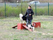 Hunde-Therapie mit Unterbringung - Tierpension Bennstedt