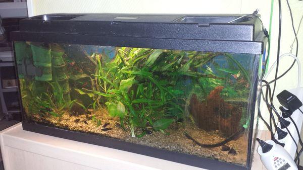 Aquarium ca 70 Liter