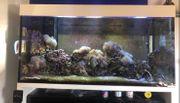 650 Liter Salzwasser Aquarium