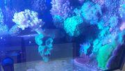 Seewasseraquarium komplett