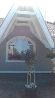 Suche Wohnung kleines Haus zur
