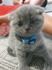 Kätzchen bald in gute Hände