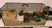 Mäusekäfig Hamsterkäfig Nagarium