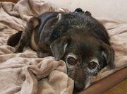 Rosi ist eine herzliche Hundeomi