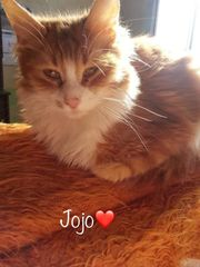 Jojo ein kleiner Herzensbrecher Tierschutzkater