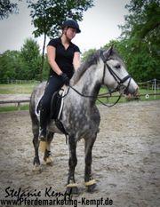 Leasingpferde Ponys für Reitschulen Privatpersonen
