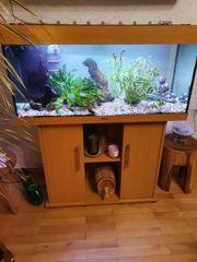 Aquarium Juwel 1M