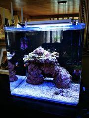 Meerwasser-Aquarium dupla Marin Ocean Cube