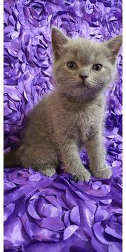 BKH Blau Kitte