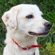 Unser wahrer Hundeschatz Miro sucht