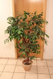 Ficus Kunstpflanze