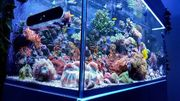 meerwasser Aquarium fische Korallen