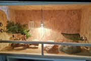 Holz Terrarium zu verkaufen