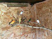 Kanarienvögel und andere
