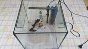 Aquarium mit Pflanzen und Fischen