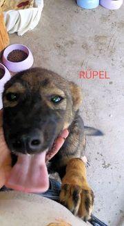 Rüpel smarter Hundebub sucht sportliche