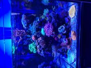 Komplettes Meerwasseraquarium