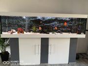 Aquarium 250x70x60