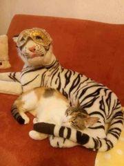 Mira Katze aus dem Tierschutz