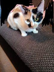 zwei süße katzen zu verschenken