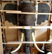 Wand Deko Mega Elefantenkopf
