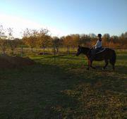 Reiterin sucht Pferd fürs Leben