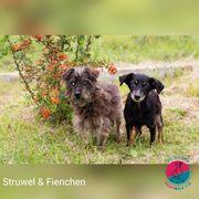 Struwel - Hat ihren eigenen Blindenhund