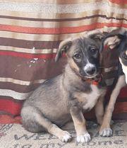 Süßes Hundemädchen ENIA