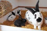 Süße junge Kaninchen suchen ein