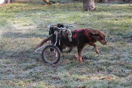 Mimmi geb 2013: Kleinanzeigen aus Rutesheim - Rubrik Hunde