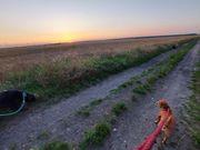 Hundebetreuung auf dem Land